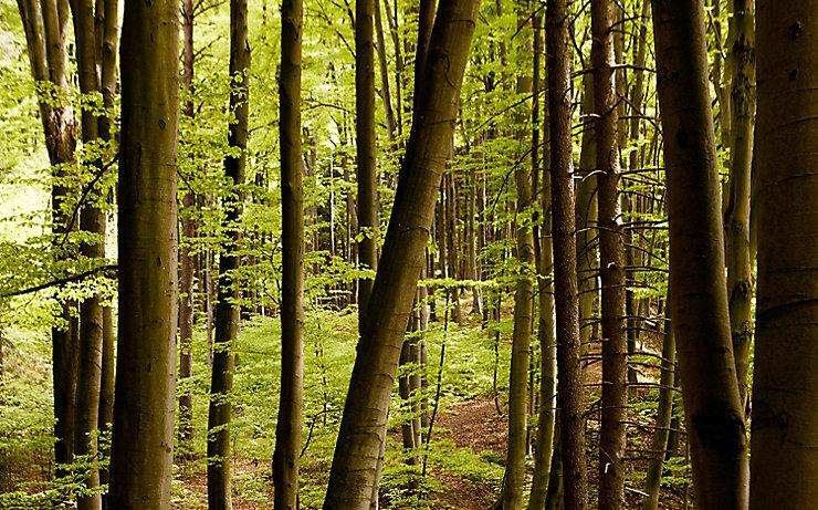 Die kraftvollen Wälder im Holzland
