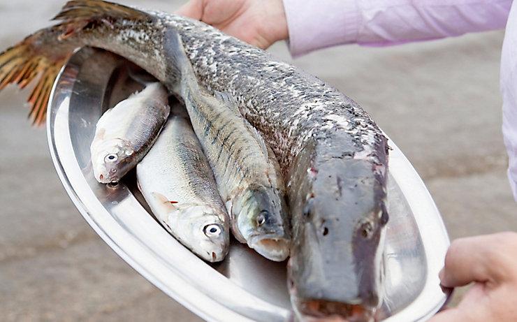 Frischer Fisch vom Simssee