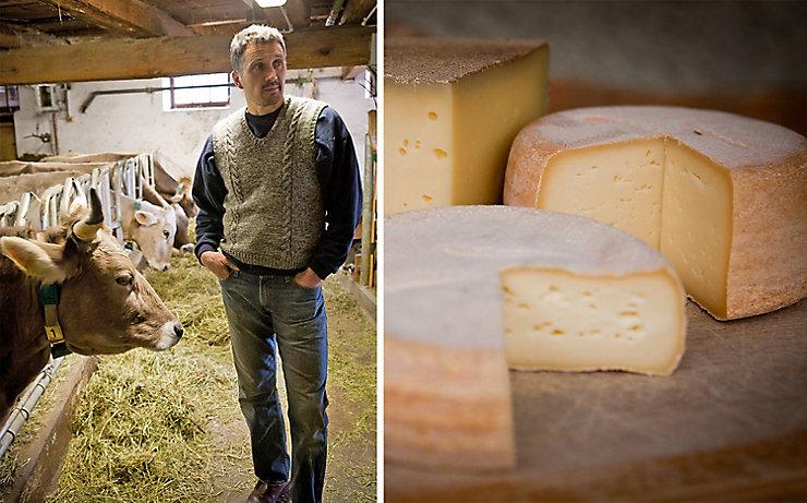 Käse und Kühe