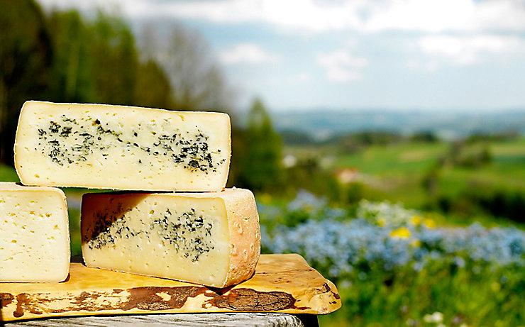 Köstlicher Mühlviertler Käse