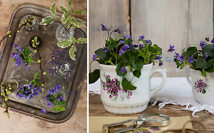Veilchen, Kirschzweige, Klebsamen und Strandflieder in kleinen Vasen