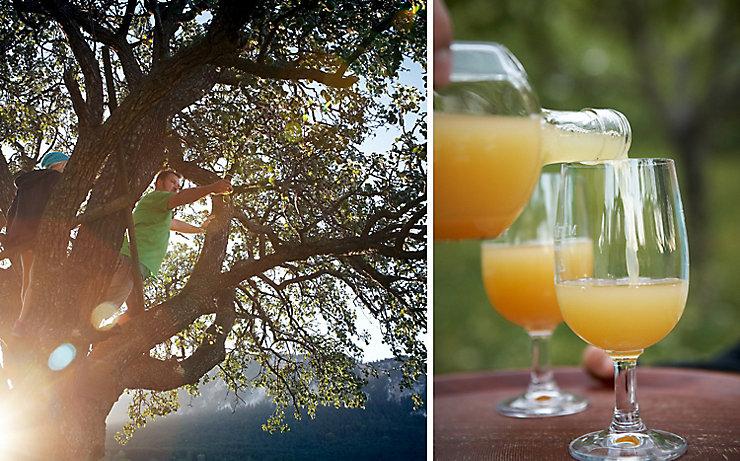 Apfelsaft: Vom Baum ins Glas