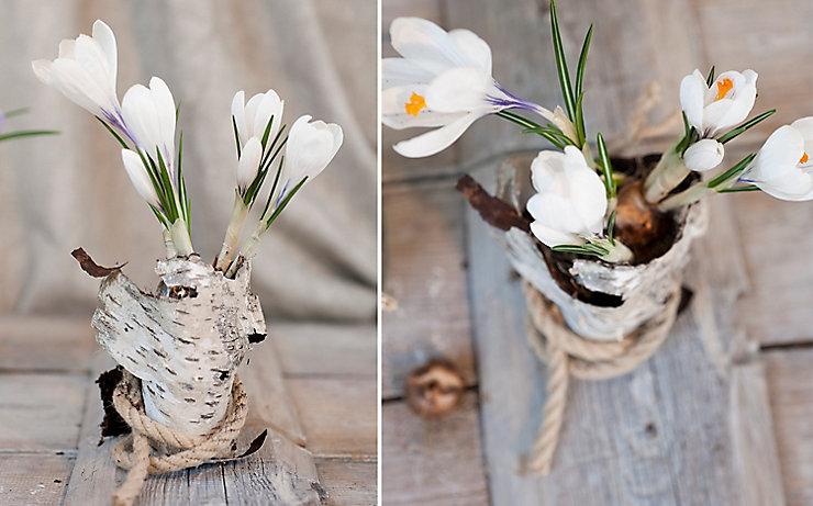 Tulpen in Rexgläsern auf einem Holzbrett