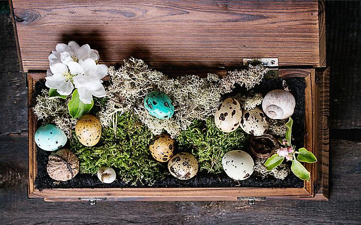 Frühling im Moosbett