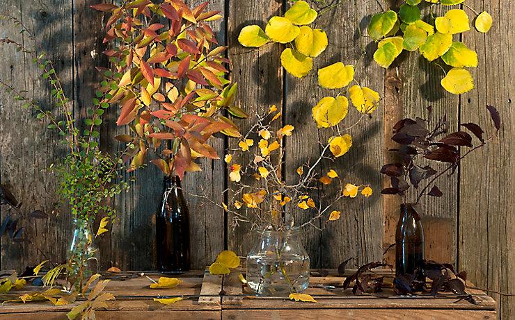 Farbenfrohe Vasen-Deko