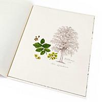 Lebensbaum Ulme