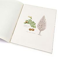 Lebensbaum Zypresse