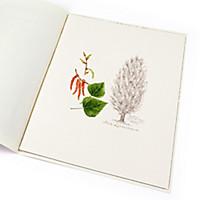 Lebensbaum Pappel