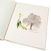 Lebensbaum Weide