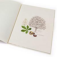 Lebensbaum Rosskastanie