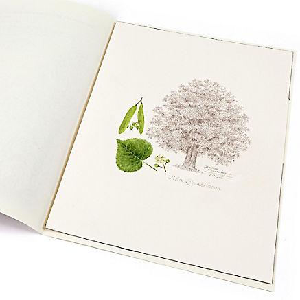 Lebensbaum Linde