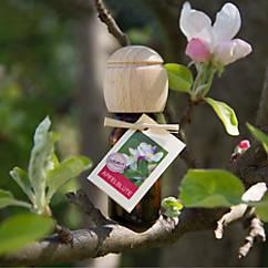 Duftöl Apfelblüte