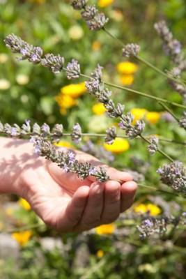 Drautaler Lavendel-Badesalz